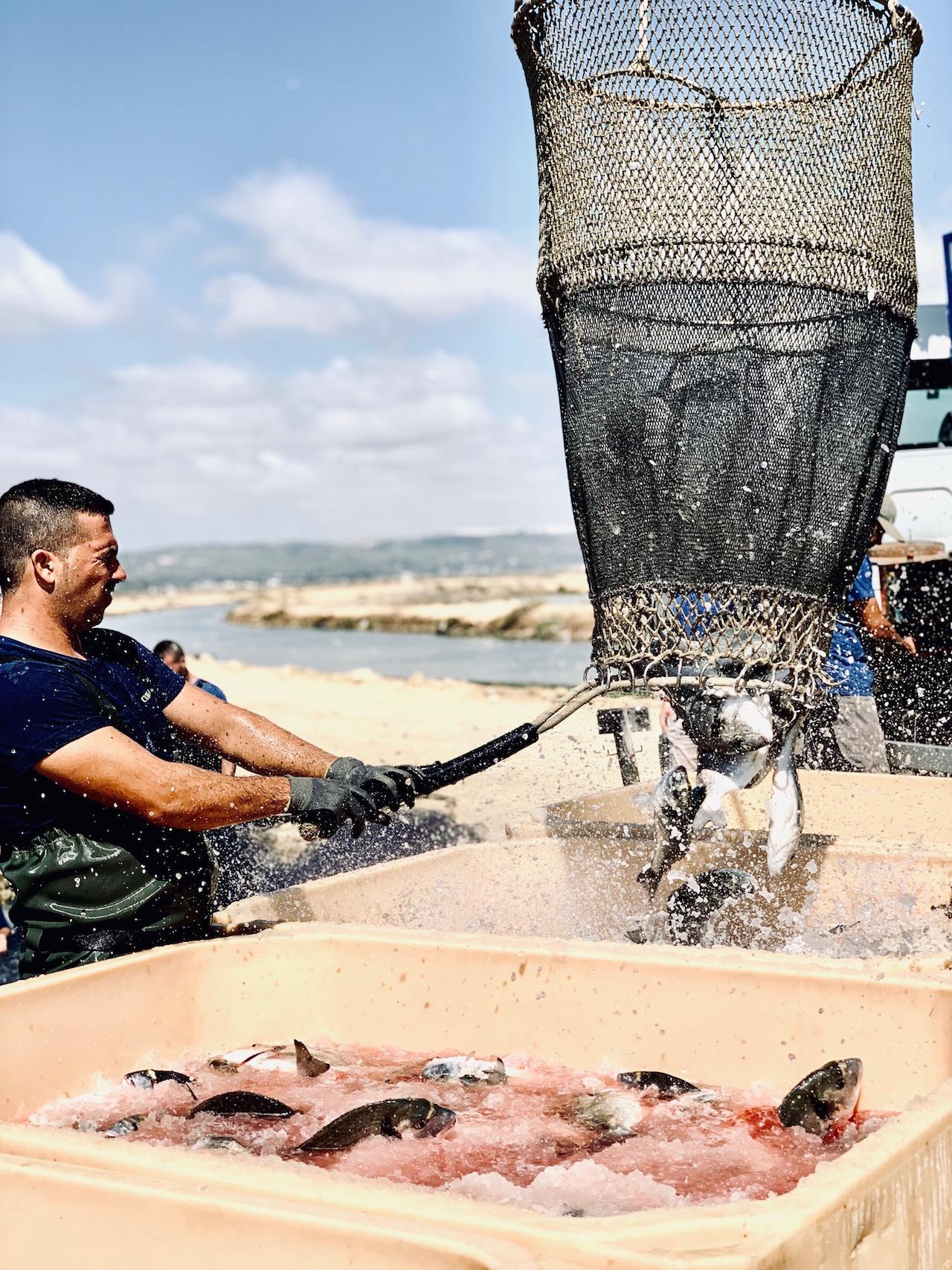 Pesqueria Lubimar und Frischeparadies