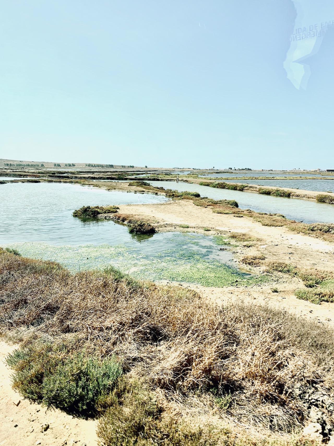Pesqueria Lubimar und Frischeparadies: